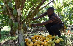 Read more about the article Groups train youths in climate smart agriculture