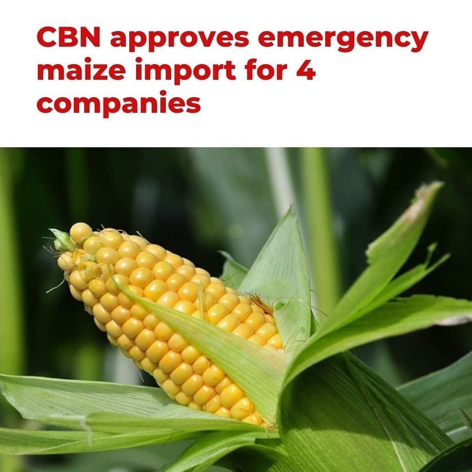CBN Approves Emergency Maize Import For 4 Companies